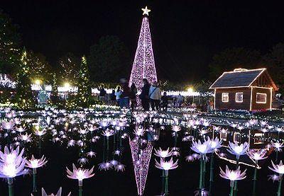 花の池のイルミネーション