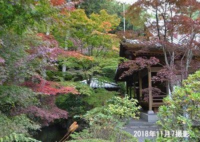 池の周りの紅葉の様子