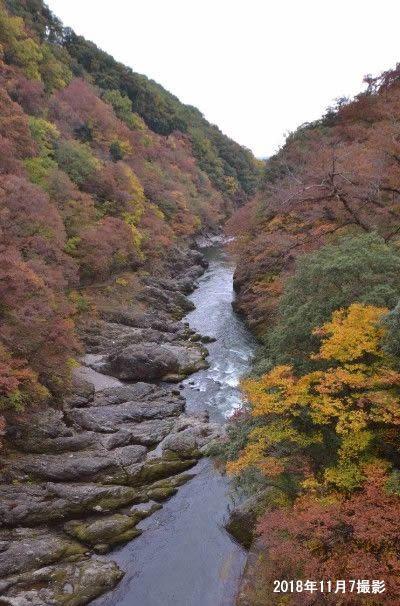 11月中旬の高津戸峡の紅葉の様子