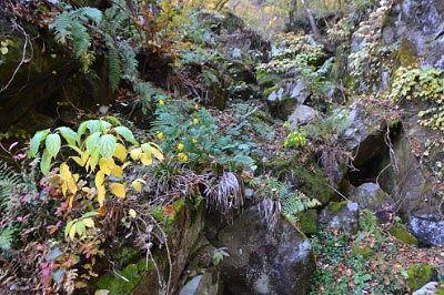 岩がゴロゴロしてた斜面の様子