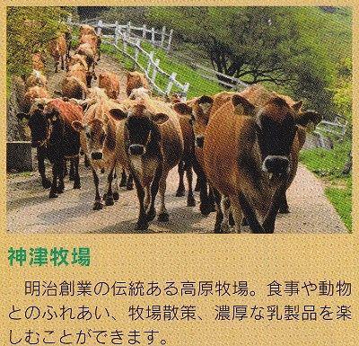 牛の行列のパンフレット