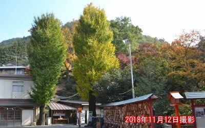 境内の紅葉の様子