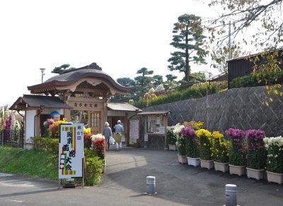 ながめ公園関東菊花大会