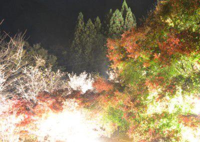 紅葉と冬桜のライトアップ