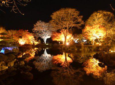池の水に反射するライトアップの様子