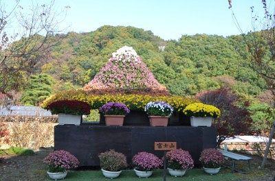 富士山の菊飾り