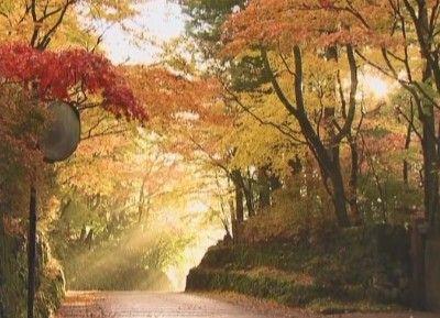 華蔵院坂の紅葉