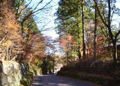 紅葉が過ぎた華蔵院坂の様子