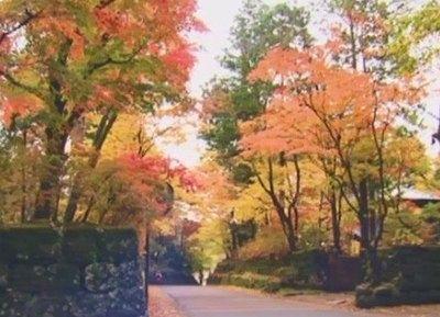 華蔵院坂の紅葉の様子