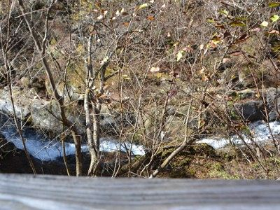 遊歩道から見えた川