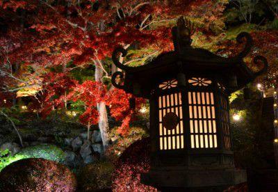 灯篭と紅葉ライトアップ