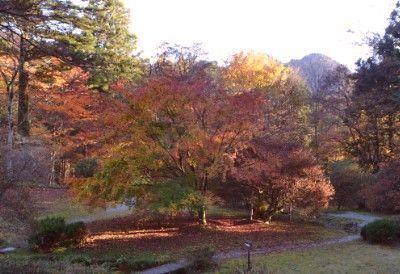 御用邸から見た庭園の紅葉