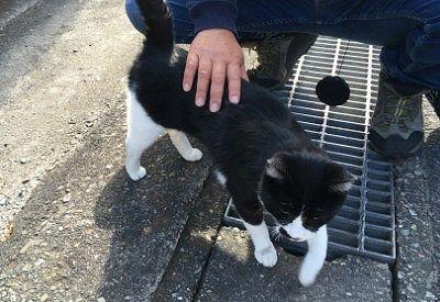 駅近くで出会った猫