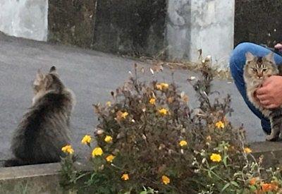温泉街で出会った二匹の猫
