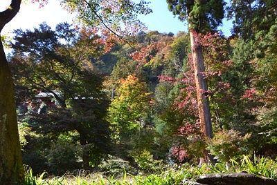 紅葉となってきた風景