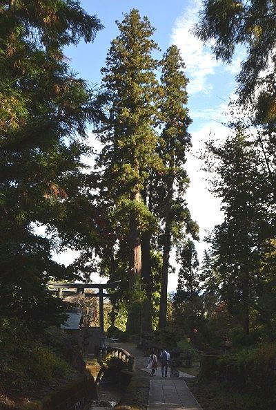 妙義神社と大杉