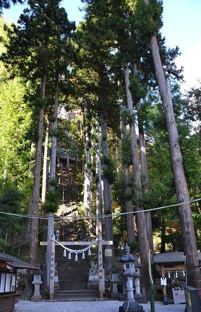 中之嶽神社へ向かう石段周りの大杉の様子