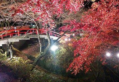 河鹿橋紅葉ライトアップの様子1