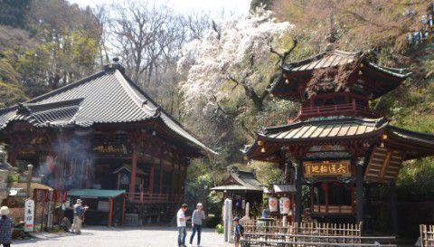 桜の樹と本堂と六角堂