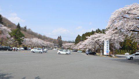 水澤観音駐車場と桜