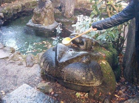 ガマガエルにお水をかけて金運アップ