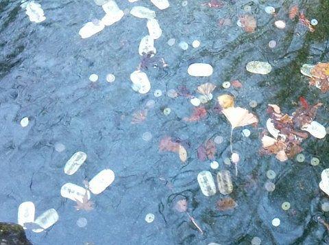 池の底に小判がある様子