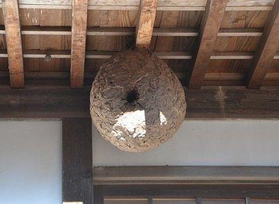 拝殿にあったスズメバチの巣