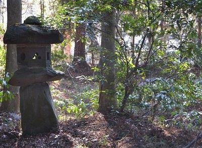 神秘的な森の境内の様子