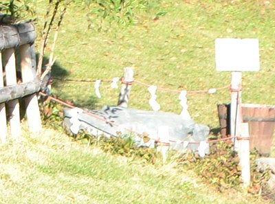 高島城亀石