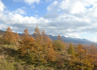 北八ヶ岳ロープウェイから見えた紅葉の景色