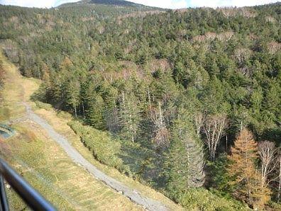 ゴンドラから見えた登山道