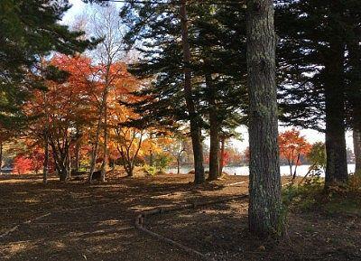 蓼科湖への遊歩道