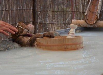 スタッフに撫でられウットリ顔で入浴してる猿