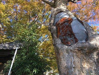 松本神社境内の紅葉