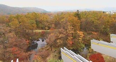 六階から見える紅葉の絶景