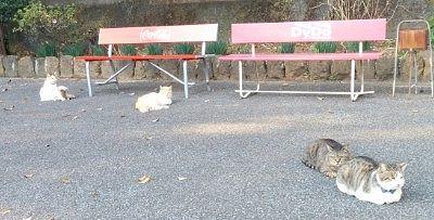 ベンチの前で寛いでた猫たち
