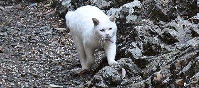 天狗岩にいた白猫