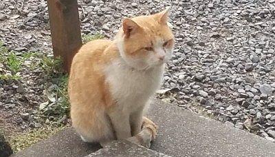 神橋手前にいた猫