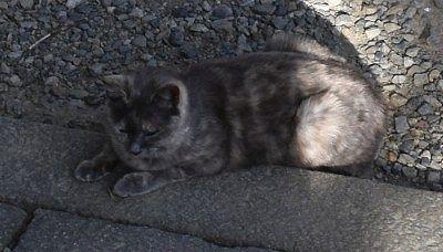 神橋を渡った後にいた猫