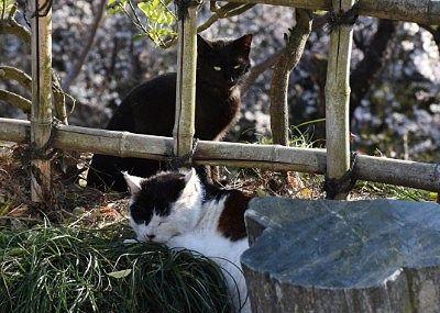 休んでた猫二匹