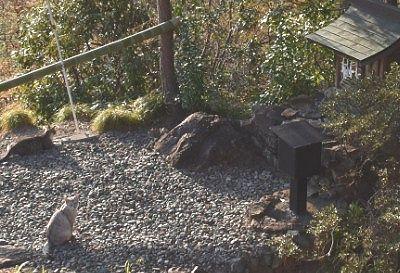 足尾神社と猫