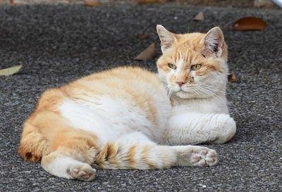 唐沢山神社に向かう時にいた猫