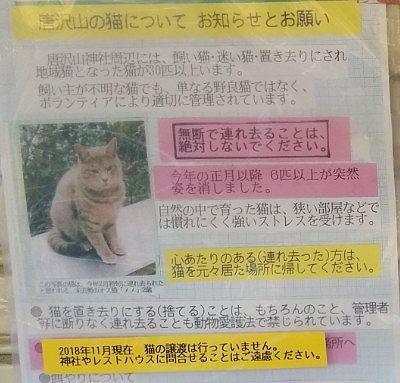 猫についてのお願い