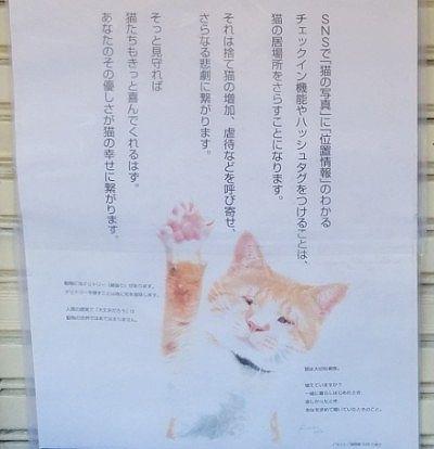 SNSで猫写真を使う時のお願い
