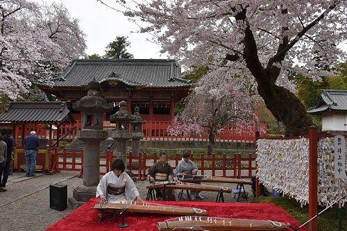 桜の事演奏の様子