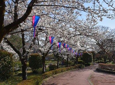 二の丸の桜の景色