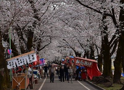 2019年赤城南面千本桜まつりの様子
