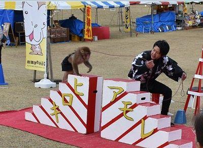 日光猿軍団のショー
