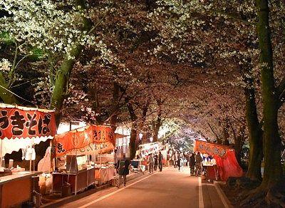 ライトアップされた桜のトンネルと露店