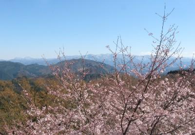 さくらの里から見えた山々と桜